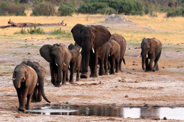 A herd of elephants walk past a watering hole in Hwange National Park, Zimbabwe,
