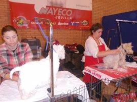 Fibes en Sevilla acoge Surmascotas, centro de exposición, venta y adopción de mascotas de Andalucía el 4 y 5 de marzo