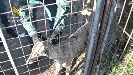 Detenidos en Cáceres tres miembros de una organización que robaba perros de caza