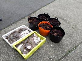 Intervenidos 69 kilos de erizo de mar y 34 de lenguado sin documentación