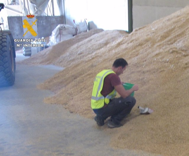 Inspección de grano en una de las naves.