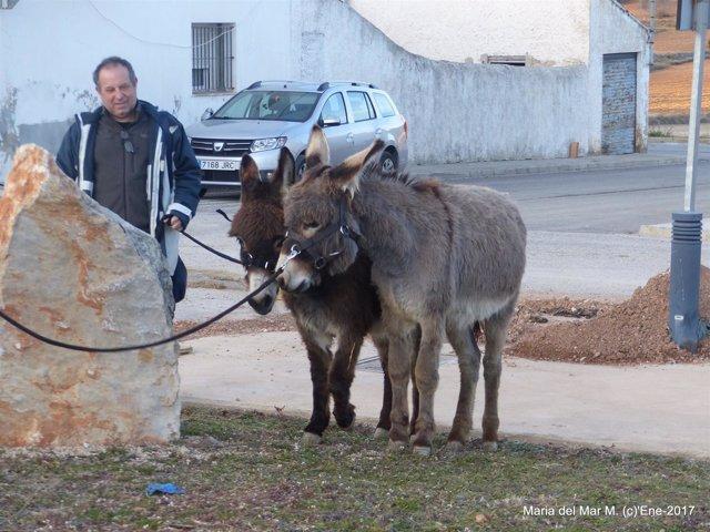 """Benagéber """"adopta"""" a dos burros"""