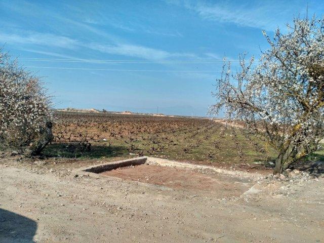 Escombrera ilegal La Plana DESPUÉS