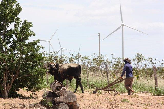 Parque eólico de Iberdrola en Brasil de Los Calangos