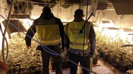 Incautan en Alicante 44 kilos de marihuana al vacío a un grupo que presuntamente la enviaba por correo a Europa