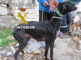 Rescatados 14 galgos, nueve de ellos cachorros, abandonados en un cercado de Úbeda