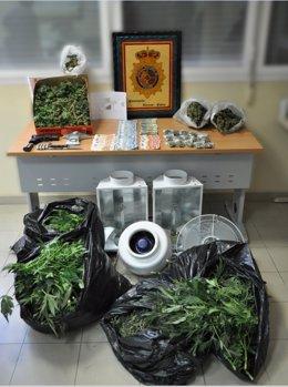 La Policía Nacional Se Incauta De Más De 90 Plantas De Marihuana Desmantelando U
