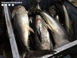 Denunciada una empresa por intentar vender atún rojo ilegalmente y sin garantías
