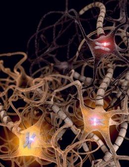Las neuronas prefieren el gen de un padre sobre el del otro