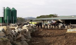 "COAG inicia en change.org una ""masiva"" recogida de firmas contra la ""macro-granja"" de 20.000 vacas de Soria"