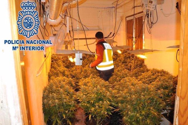 Desmantelada una plantación de marihuana en un piso en pleno centro