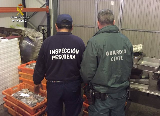 Pulpo no reglamentario intervenido en Lepe (Huelva).