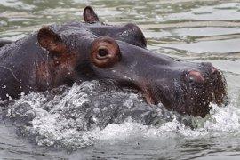 Matan de una paliza al último hipopótamo del Zoológico Nacional de El Salvador