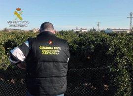 Detenidos los miembros de un clan familiar por el robo de una tonelada y media de naranjas