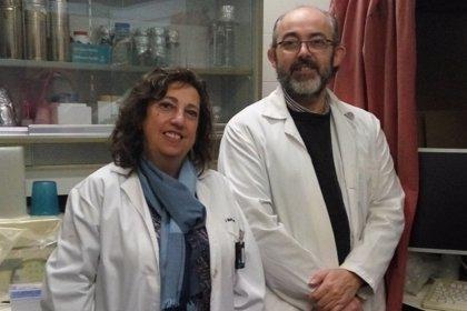 Investigadores de la UCLM descubren un nuevo papel del colesterol en la regulación de proteínas cerebrales