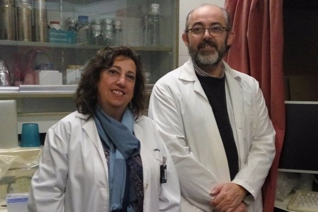 Uclm: Investigadores De La Uclm Descubren Un Nuevo Papel Del Colesterol En La Re