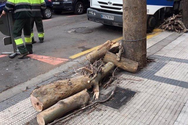 Rama desprendida en la calle Almagro