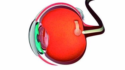Desarrollan prótesis de retina basadas en grafeno que permitirían recuperar parcialmente la visión en algunos casos