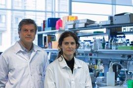 El CNIC coordina un proyecto europeo para fomentar la colaboración entre investigación académica y la industria