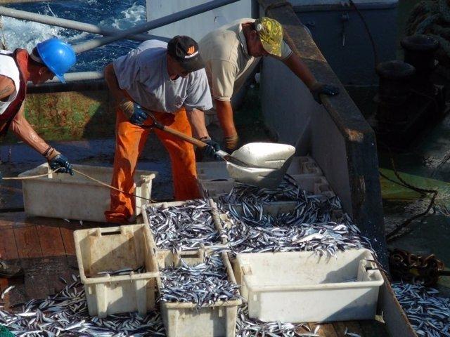 Pesca de la anchoa