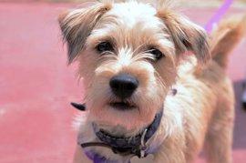 Las Corts reclaman un estudio para permitir y regular el acceso de mascotas en FGV en el plazo de un año
