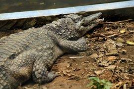 Un grupo de visitantes mata a pedradas a un cocodrilo en un zoológico de Túnez