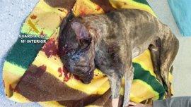 Investigado por maltratar a un galgo en Cáceres que tuvo que ser sacrificado