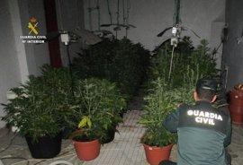 Dos detenidos e intervenidas 35 plantas de marihuana en Fabero