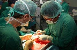 Más cerca de poder congelar órganos para trasplantes