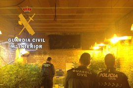 Dos detenidos en Méntrida (Toledo) por tener en un garaje casi 3.000 plantas de marihuana