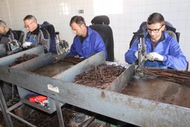 Viveros Villanueva se instala en Mallorca tras la prohibición de sacar vegetales por la 'Xylella fastidiosa'