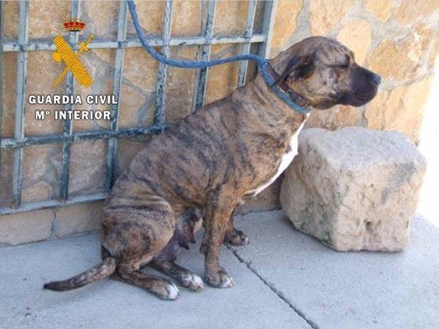 Uno de los perros que mordieron al hombre de Santa Marta.