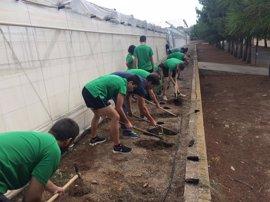 Más de 400 personas participan en un proyecto de construcción de setos y 'hoteles' para insectos antiplagas en Almería