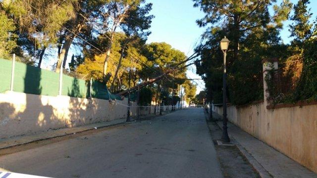 Los vientos han tumbado árboles en localidades como Rocafort (Valencia)