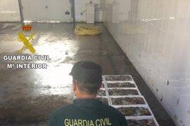 Intervienen 150 kilos de pulpo inmaduro en la bodega de un barco en Torrevieja