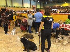 Fibes clausura Surmascotas 2017 con la visita de 16.500 personas