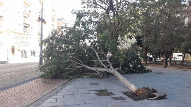 El viento ha tumbado un árbol en el parque de Marxalenes