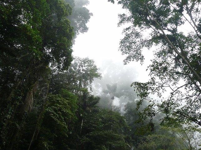 Selva venezolana