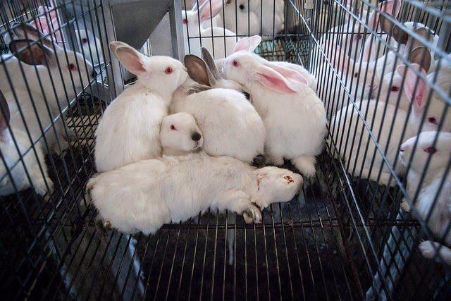 Conejos apiñados en una jaula