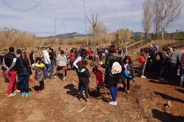 Plantan 175 nuevos árboles en el 'Bosc dels Infants'