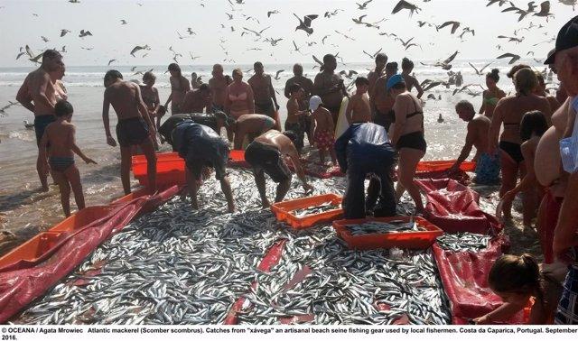 La mayoría de especies sufre sobrepesca en Europa