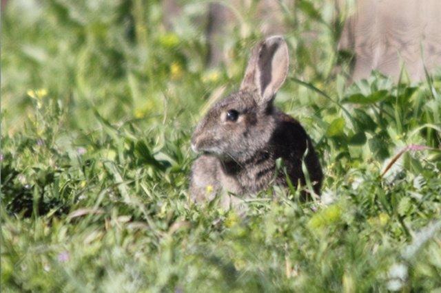 Conejo, animales, bosque, fauna
