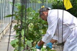 La UPV, entre las 100 mejores universidades en Agricultura y Ciencias Forestales