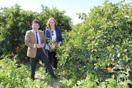 Andalucía valora la unión de agricultores, ecologistas y distribución para producir cítricos sostenibles