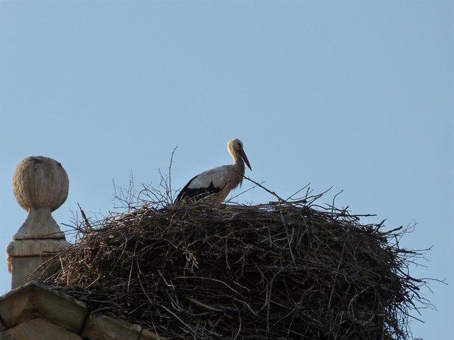 Cigüeña, nido de cigüeñas, ave migratoria, aves migratorias