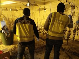 Nueve detenidos con 37 kilos de marihuana  en Salamanca