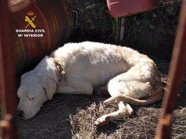 Detenido un vecino de Molvízar (Granada) que estaba dejando morir de hambre y sed a un perro enfermo