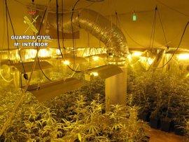 Detienen a una persona e investigan a otra por cultivar marihuana en Chiloeches