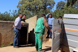 Diputación atiende a 28 solicitudes de ganaderos de la provincia con la entrega de 76 reproductores porcinos