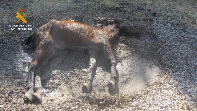 Yegua muerta en una finca de Echauri